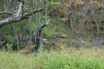 Árvore-do-céu ( Ailanthus altissima) ECOSATIVA, Lda.