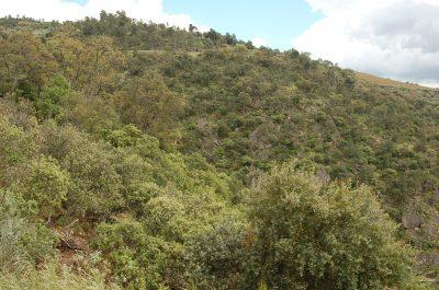 Bosque de Quercus ECOSATIVA, Lda.