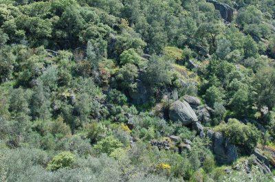 Bosques mistos de Sobreiro - Zimbro ECOSATIVA, Lda.