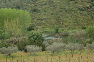 Linhas de água - boas fontes de alimento para diversas espécies ECOSATIVA, Lda.