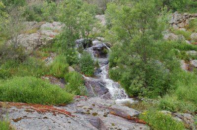 Linhas de água importantes para diferentes espécies ECOSATIVA, Lda.
