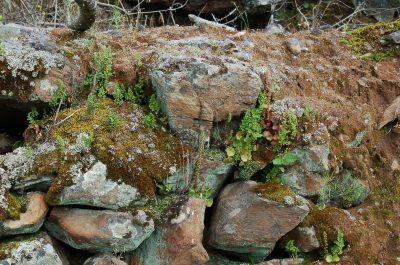 Muro de líquenes e musgo ECOSATIVA, Lda.
